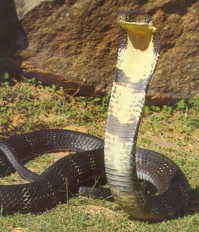 Топ 10 самые большие змеи в мире   ТОП 10