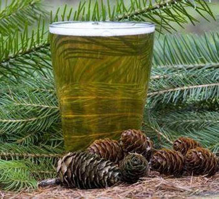 Новозеландское еловое пиво