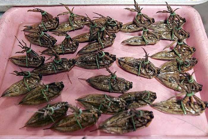 Жареные жуки