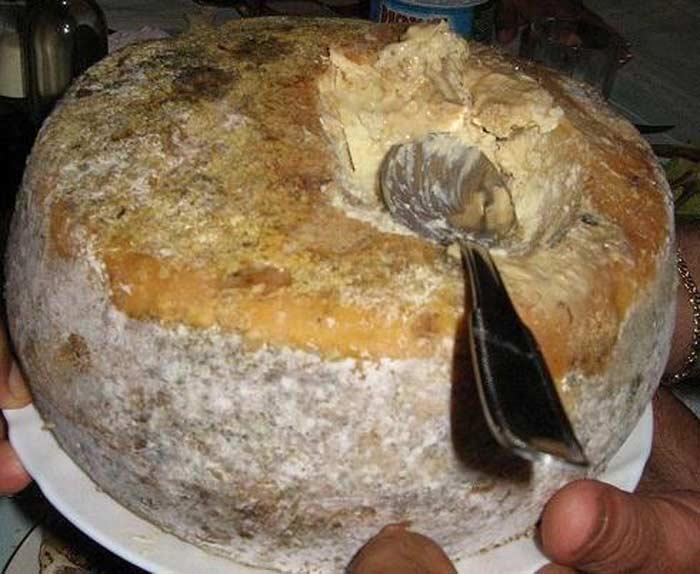 Casu marzu - гнилой сыр