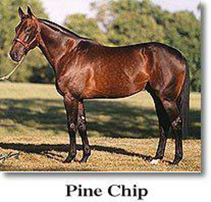 Лошадь Пайн Чип