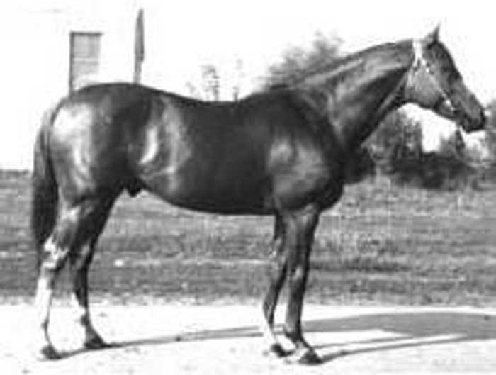 Лошадь Сардар