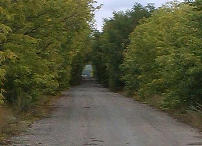 Тоннель из деревьев, Украина