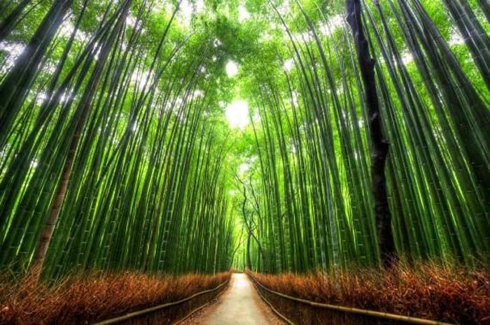 Тоннель «Бамбуковый путь»