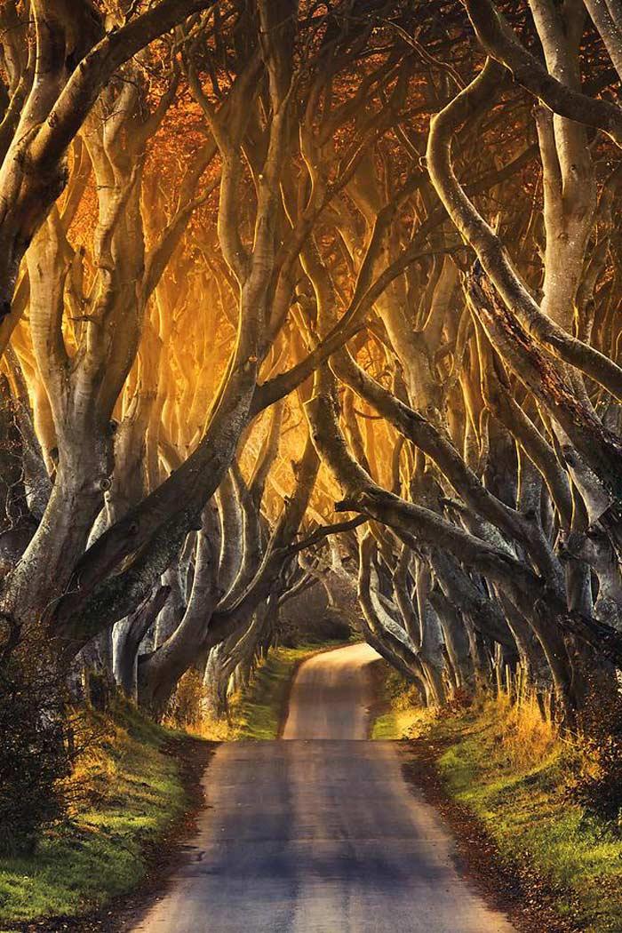 Буковый тоннель в Ирландии