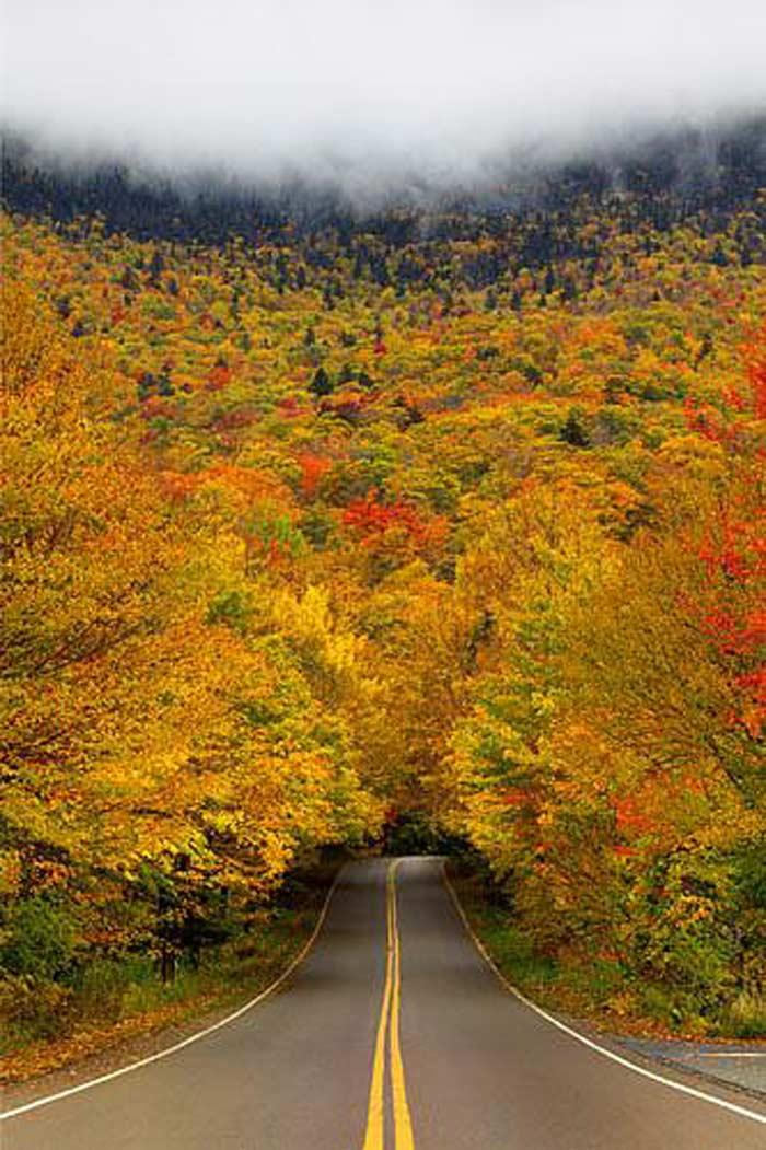 Тоннель осенних деревьев