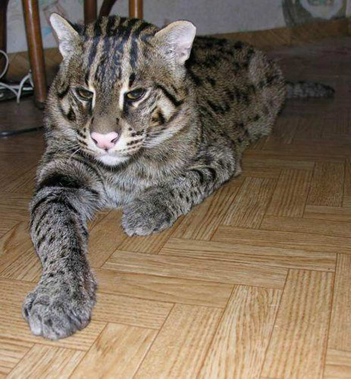 http://dekatop.com/wp-content/uploads/2013/03/cat_06.jpg