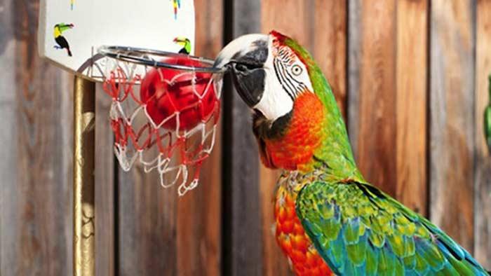 попугай Заке из Калифорнии