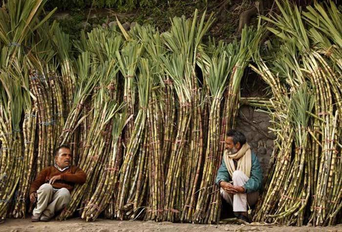 Мебель из сахарного тростника