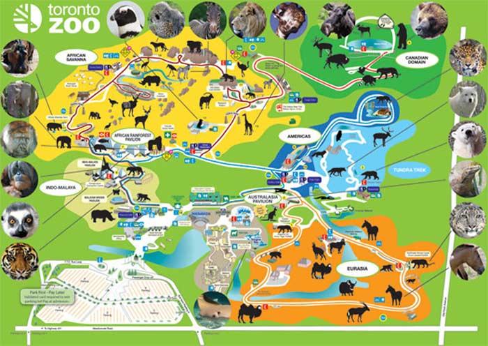 Зоопарк Торонто (Канада)
