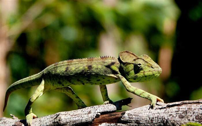 Мадагаскар, Национальный парк Монтань Д'Амбр или «Янтарная гора»