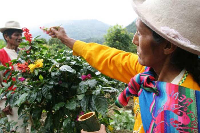 Перу кофе