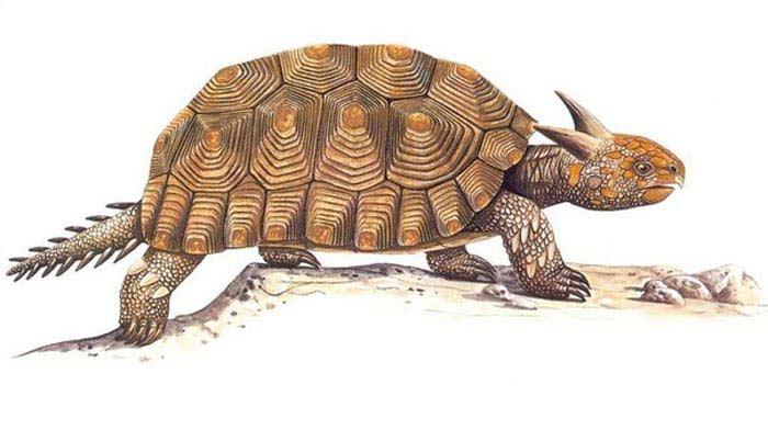 Самые большие черепахи. Миолания