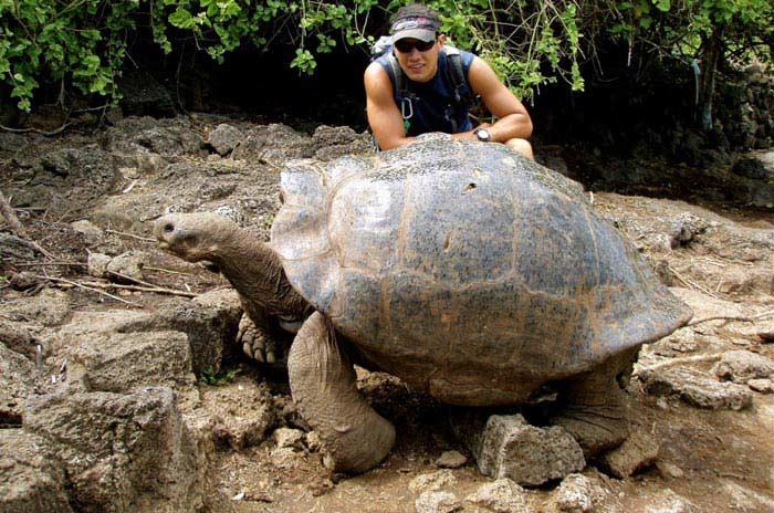 Самые большие черепахи. Слоновая черепаха