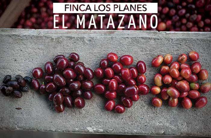 Топ 10 Самых дорогих сортов кофе. Los Planes