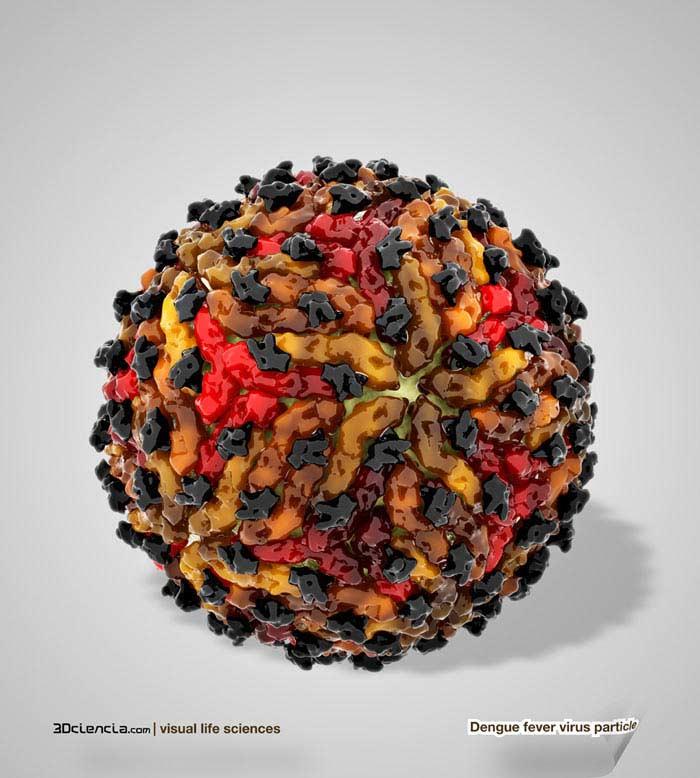 Топ 10 Самых опасных вирусов. Арбовирусы семейства Flaviviridae
