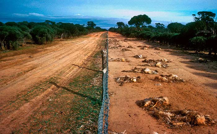 Австралия забор