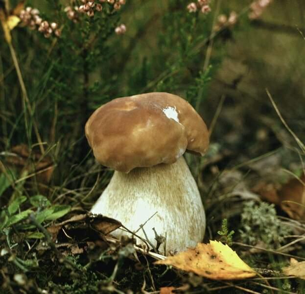 10 самых интересных грибов