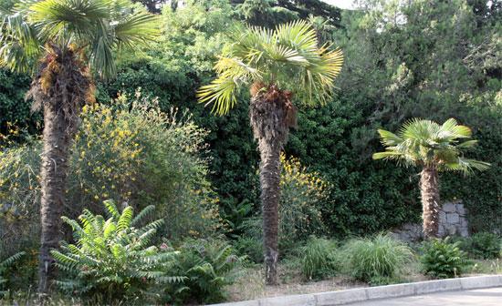 Топ 10 старейших ботанических садов Украины