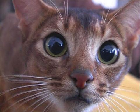 ТОП 10 самых страшных фактов о кошках