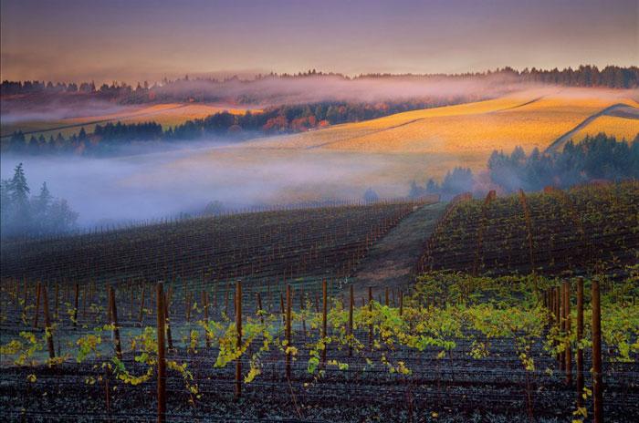 Крупнейшие страны производители вина. США