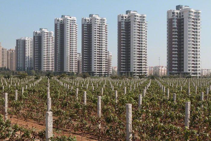 Крупнейшие страны производители вина. Китай