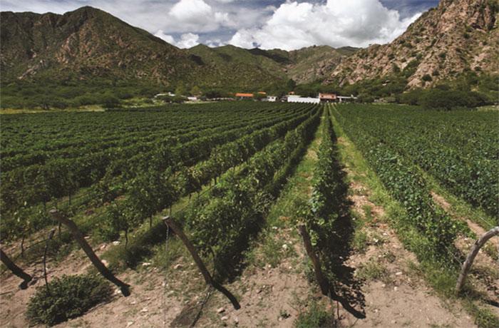 Крупнейшие страны производители вина. Аргентина