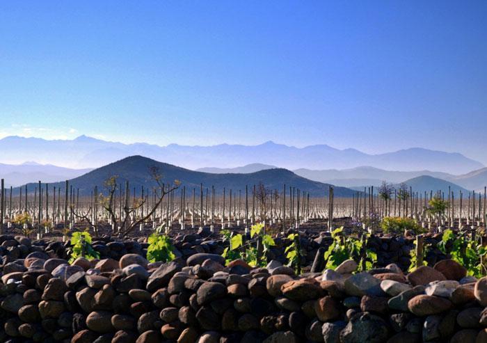 Крупнейшие страны производители вина. Чили