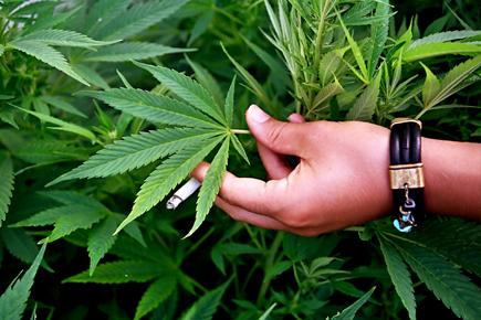 лечебных свойствах марихуаны
