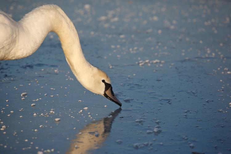 Балтийское море замерзло