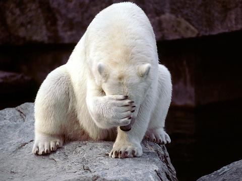 Будить белого медведя