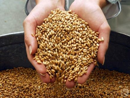 пшеничный дождь