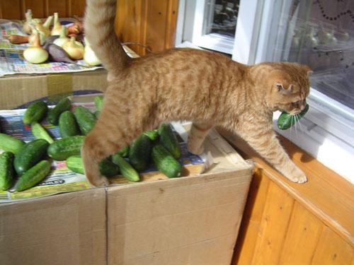 Кот клептоман