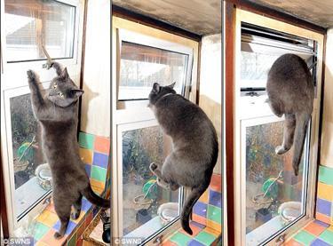 Кот домушник