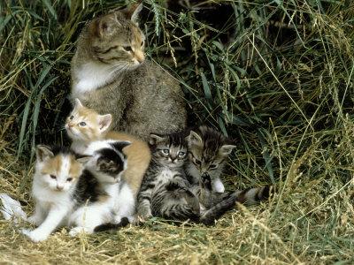 Кот усыновитель