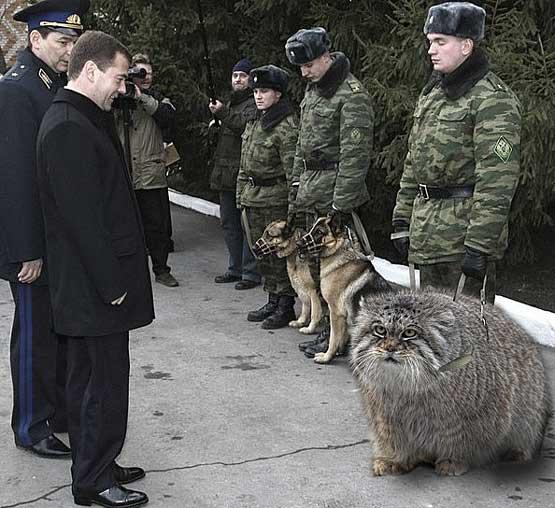Кот пограничник