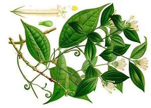 Топ 10 самых ядовитых растений
