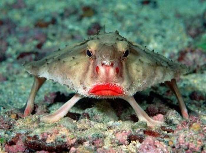 Топ 10 самых необычных глубоководных обитателей морей и океанов