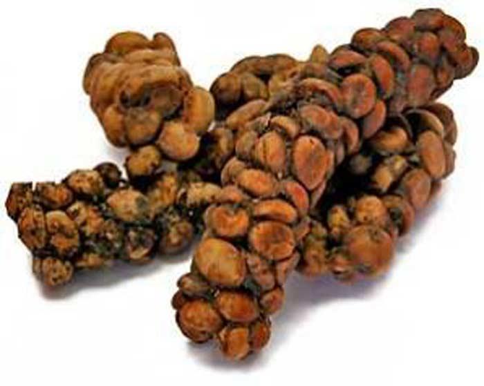 Кофе «Kopi Luwak»