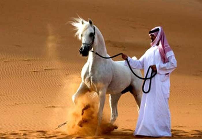 Лошадь Сметанка