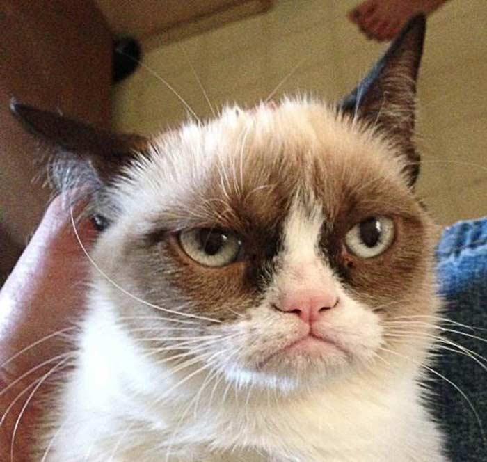 Сердитый (недовольный) кот