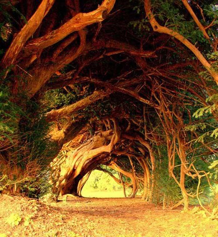 Yew тоннель