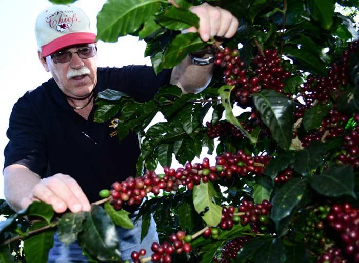 Гондурас кофе
