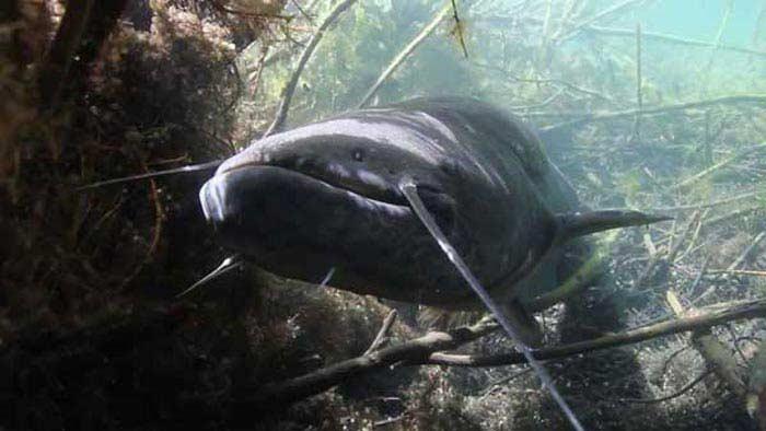 Самые большие рыбы.
