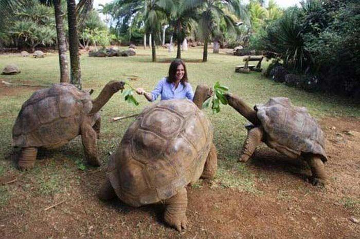 Самые большие черепахи. Исполинская черепаха