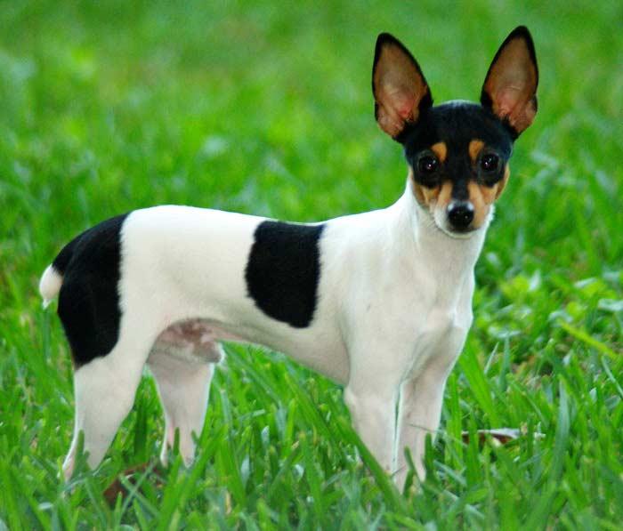 Топ 10 Самых маленьких собак