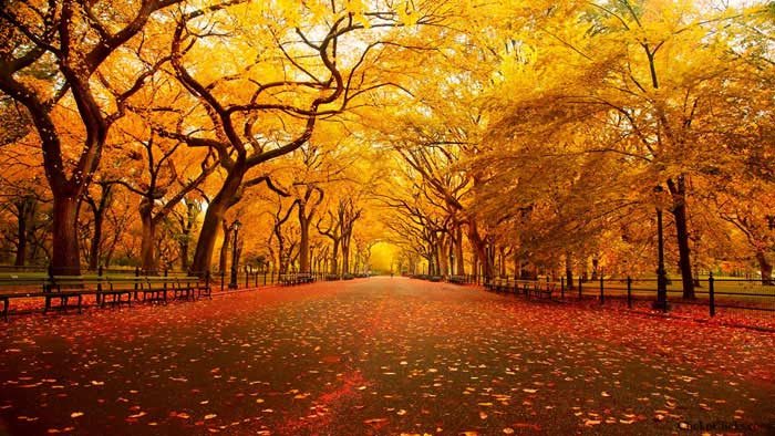 Центральный парк (Нью-Йорк, США)