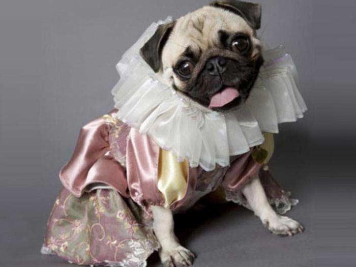 Pug-let: собачий театр