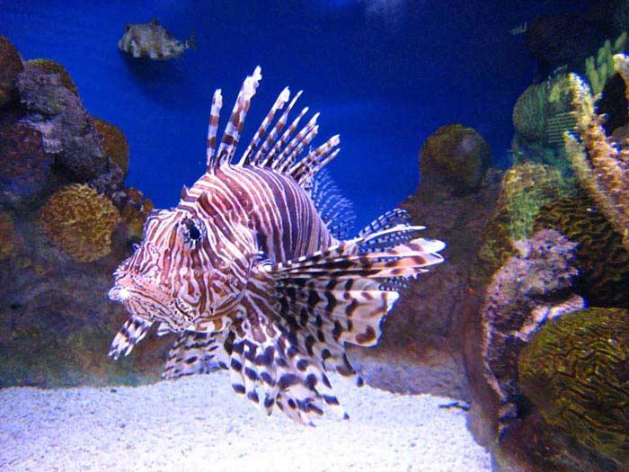 Топ 10 Самых ядовитых рыб