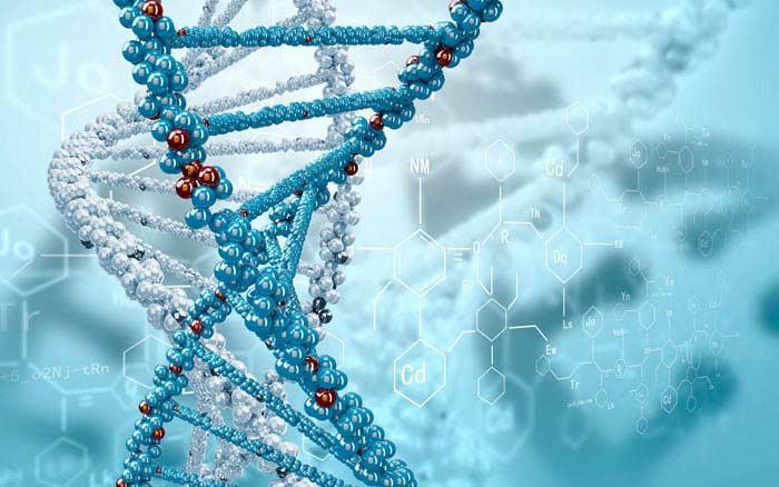 Молекула человеческого ДНК – это зашифрованное послание